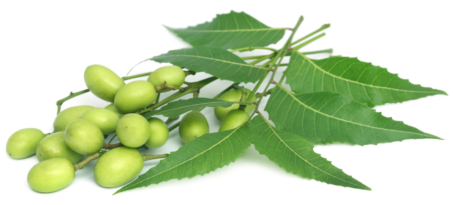 Image result for neem oil on fruit and veg