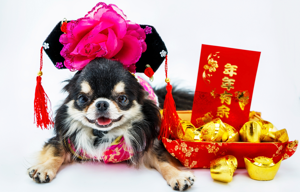 Make 2018 the Best Year for Chihuahua Health